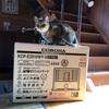 新・CORONA...ストーブをサバイバル用に購入しました