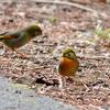 日本 2月3日の文殊の森公園の野鳥たち