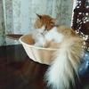 どこへ行ってたのか猫ちゃー