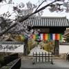 湖西市の史跡、本興寺でお花見してきた