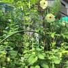 8月も中旬過ぎ。植物の勢いが一斉ではなく・