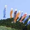 【 令和もやります!…鯉のぼりフェスティバル開催中!!】#17