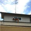 西日本豪雨で行方不明になったミニチュアホースの『リーフ』が3日ぶりに発見される!ただ、息子の『アース』・ヤギ2匹は依然行方不明のまま!!