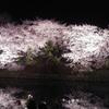 2019年 福岡城さくら祭り