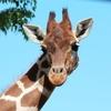 何歳から動物園が楽しい?子供の月齢別に反応を振り返ります