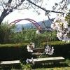 寺島の桜が見頃