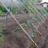 秋キュウリの支柱建て@新潟EMBC複合発酵バイオで栽培する健康農産物の会