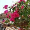 【沖縄の植物】お散歩の楽しみ もりもり咲いたお花たち