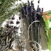 庭で採れたハーブで無添加ハーブ石けん作ってみた
