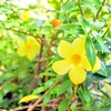 【スキンケア】花粉症がひどくなるその前に!今すぐできる『花粉対策』をして、ストレスが少ない快適な春を迎えよう!