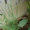 うちの庭という名の極小花壇