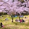 大阪堺の穴場ローカルお花見スポット!