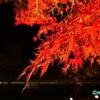 暗闇に浮かび上がる紅葉(その2) ― 赤と黒 ―
