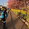 三浦海岸⑨&湘南国際村⑥&河津桜