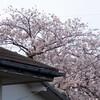 audi A3 で行く 篠山城址 周辺 お花見プチドライブ @兵庫県篠山市