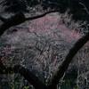 三渓園・春