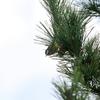 噂の珍鳥キバラガラ
