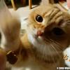 イケメン猫ヤマトが食べているおやつ