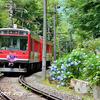 箱根登山鉄道とアジサイ