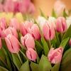 【タイプ別】母の日に贈りたい! 花のプレゼント4選!