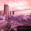 GR Digital4で赤外線写真