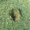 ゴルフのマナー。月例でのK国選手の振舞い。