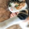 【愛猫日記】毎日アンヌさん♯123