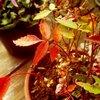 盆栽も秋色に