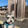有馬富士公園でお散歩