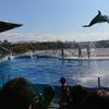 京都水族館で遊ぼう