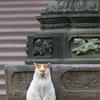 護国寺での猫撮影アゲイン〜その2