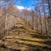 【残紅葉】秋がほぼ終わっている滝子山の快適登山(2018年11月24日)