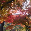 月の石もみじ公園と宝登山神社の紅葉です