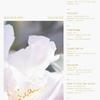 TWICE「MORE&MORE」の作詞、作曲者 ザラ・ラーソン、MNEK etc...【2020.5.19】