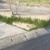 自宅にとりあえず芝生を植えてみた・・・★