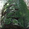 那岐山と後山にはさまれた袴ヶ仙はイノシカクマに加えマムシにも注意