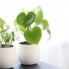 観葉植物を室内に置くことで得られる効果がとんでもない話