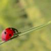 古い家に虫がでやすい原因と対策方法
