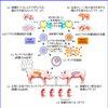 じじぃの「臓器再生技術・すい臓・腎臓の生体臓器移植・ヒト化ブタ!21世紀の世界」