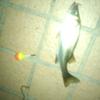 魚種錬金2013~part2