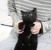 黒猫は画像でカワイさを伝えるのが難しい!