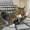 7月後半の #ねこ #cat #猫 その1