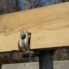 単管パイプに木材を固定する方法