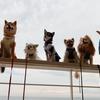 10月3日(土)「愛犬と一緒に岡山倉敷を満喫ツアー」