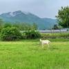 タカマサ流のFXブログはヤギの写真も載せてある