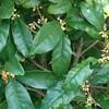 木犀の匂い…