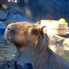 【ついに交互浴をやってみた!温泉、サウナ、水風呂サイコー!トレーニーはジムの後や休養日にオススメ】