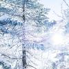 寒さに効果あり!皮膚温を約1.5℃上げる方法