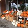 かぼちゃの季節