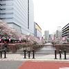 百段階段と目黒川の桜